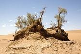 沙漠景观 — 图库照片