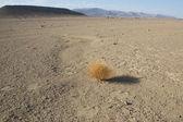 Flat desert landscape — Stock Photo