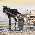 Ethiopian horse carriage — Stock Photo