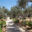 Garden of Gethsemane — Stock Photo #31215055