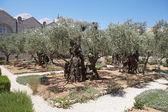 Giardino di getsemani — Foto Stock