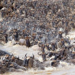 Wildebeest (Connochaetes taurinus) great migration — Stock Photo