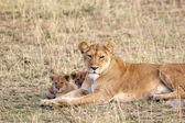 African lioness (Panthera leo) and cubs — Stock Photo