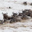 Stock Photo: Wildebeest (Connochaetes taurinus) migration
