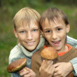 Two young boys gather mushrooms — Stock Photo