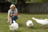 Cool flock of white geese — Stock Photo