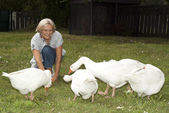 Funny flock of white geese — Stock Photo