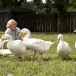 Cute flock of white geese — Stock Photo #29190815