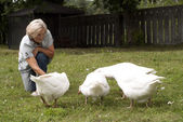 Fun flock of white geese — Stock Photo