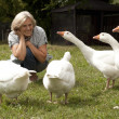 Fine flock of white geese — Stock Photo #32391955