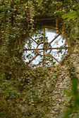 Old window covered with ivy — Stock Photo