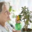 Senior woman watering plant — Stock Photo