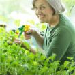 Senior woman watering flowers — Stock Photo #46719931
