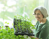 Senior woman planting — Stock Photo