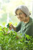 Fleurs d'arrosage senior femme — Photo