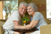 Senior  couple sitting on the table — Stock Photo