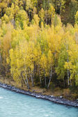 Xinjiang, china: autumn foliage — Stock Photo