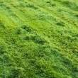 Stock Photo: Green medow