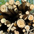 Stock Photo: Stack of birch logs