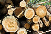 Stack of birch logs — Stock Photo