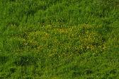 Grass vibrant — Stock Photo