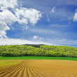 Forest,meadows and fields - Stock Photo