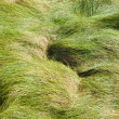 Windy grass — Stock Photo
