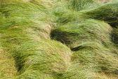 Windy grass — Стоковое фото