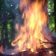 Pile of branches burning in forest - Stock Photo