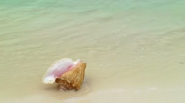 Conch Shell on Cancun Beach — Stock Video