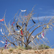 Stock Photo: Dead Tree Covered in Womens Bras