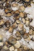 Musslor på is till salu på jordbrukarna marknaden — Stockfoto
