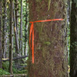 Trail Marker on Tree — Foto Stock