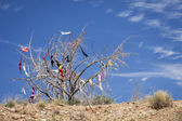 Dead Tree Covered in Womens Bras — Stock Photo