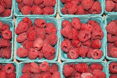 Raspberries in farmers market — Stock Photo