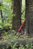 Red umbrella leaning against tree in rainforest — Stock Photo
