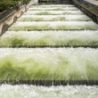 Fish Ladder — Stock Photo