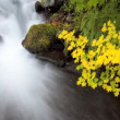 Time Lapse, rushing water — Vídeo Stock