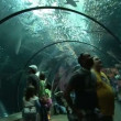 Underwater tunnel — Stockvideo