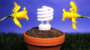 Energy saving light bulb planted — Stock Video