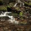 Olympic National Park river — Stockvideo