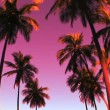Colorful Palm Trees — Stockvideo