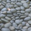 Stock Video: River Rocks