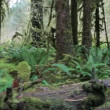 Stock Video: Hall of Mosses