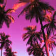 Colorful Palm Trees — Stock Video