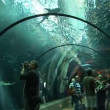 Underwater tunnel — Stock Video