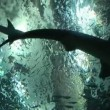 Shark Habitat — Stock Video