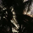 Stock Video: Backlit Palm Tree