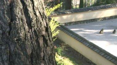 Jardín japonés de la roca — Vídeo de Stock
