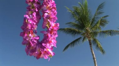 Lei by a palm tree — Stock Video